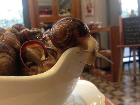 Le Petit gris snails